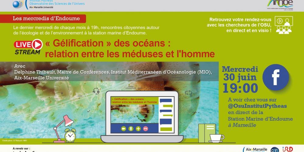 « Gélification » des océans : relation entre les méduses et l'Homme. Une conférence de Delphine Thibault