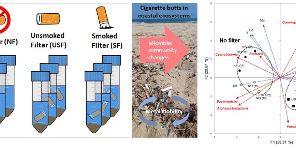 Impact des mégots sur la diversité des bactéries et des métaux dans l'environnement marin