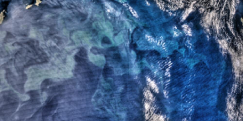 Le cycle saisonnier du phytoplancton en Méditerranée