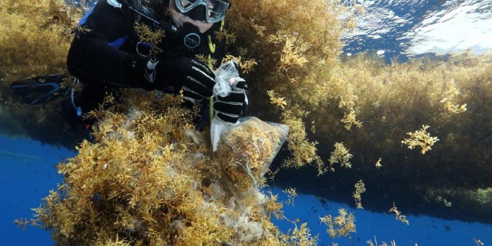 Les algues, ces historiennes des mers