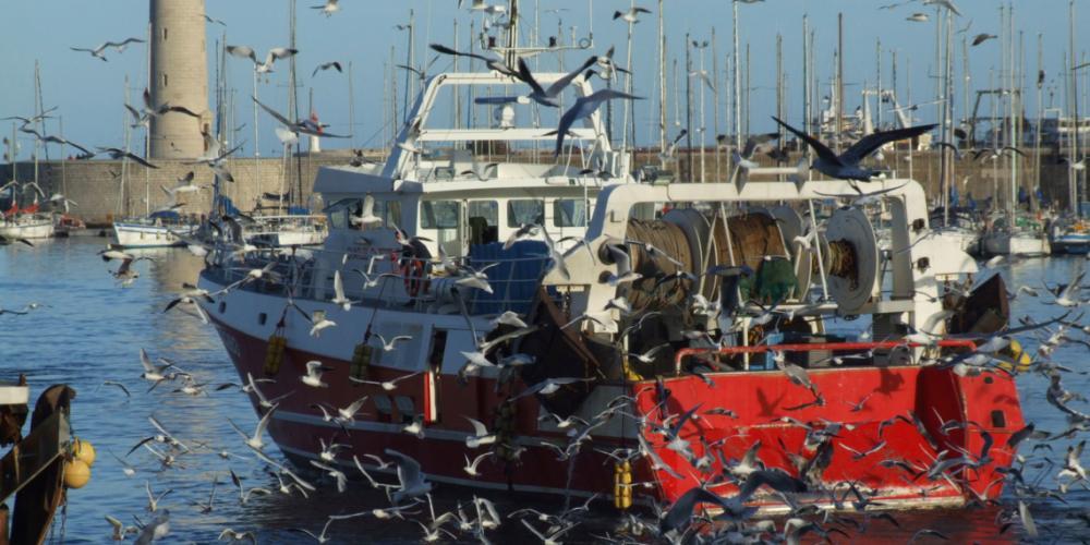 Bilan 2020 de l'état des populations de poissons pêchées en France
