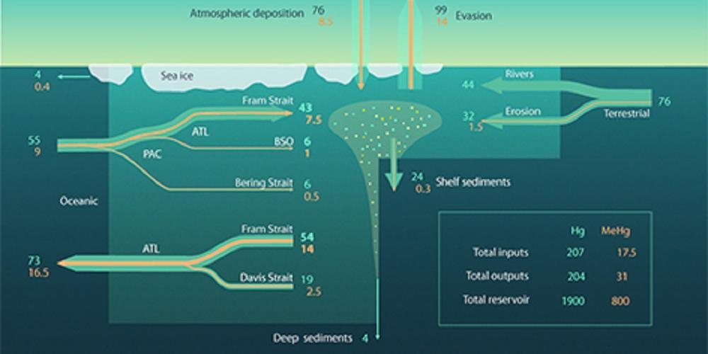 L'océan Arctique exporte du mercure vers l'océan Atlantique