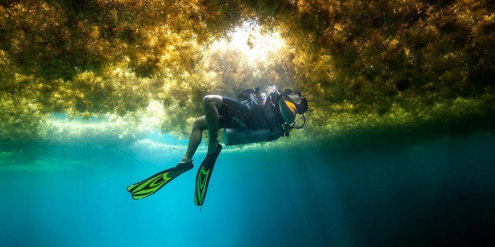 Le littoral protégé des calanques menacé par une algue verte asiatique invasive en Méditerranée