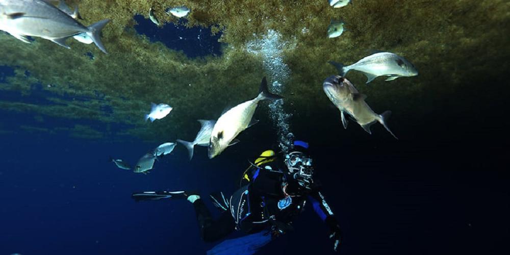 Le spatial au service de l'étude des sargasses en mer