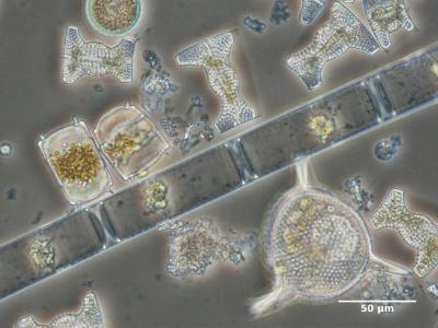 organismes marins